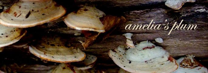 amelia's plum